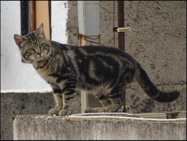 Cat at El Castillo de Santa Ana in Oliva