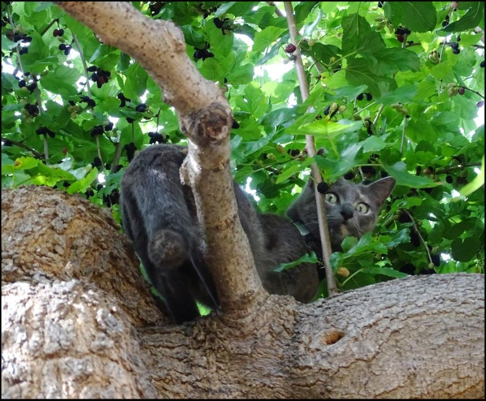 House Cat on The Tree in A Residence Garden