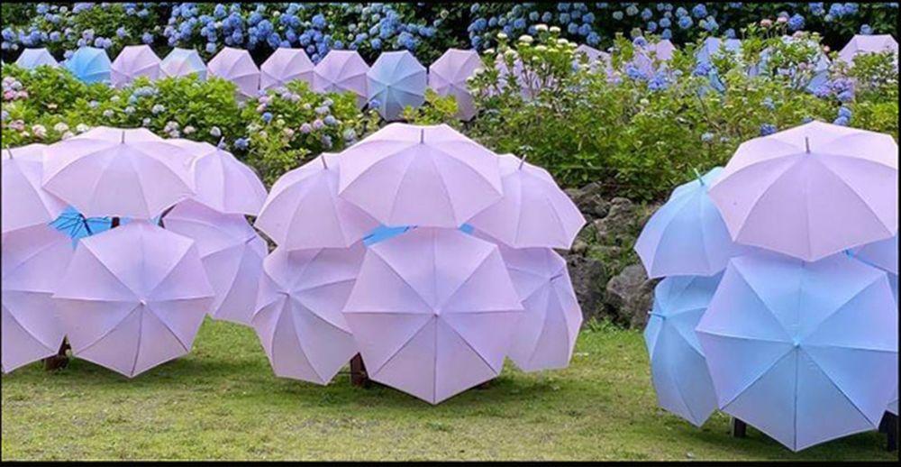 Hydrangea Umbrella Art