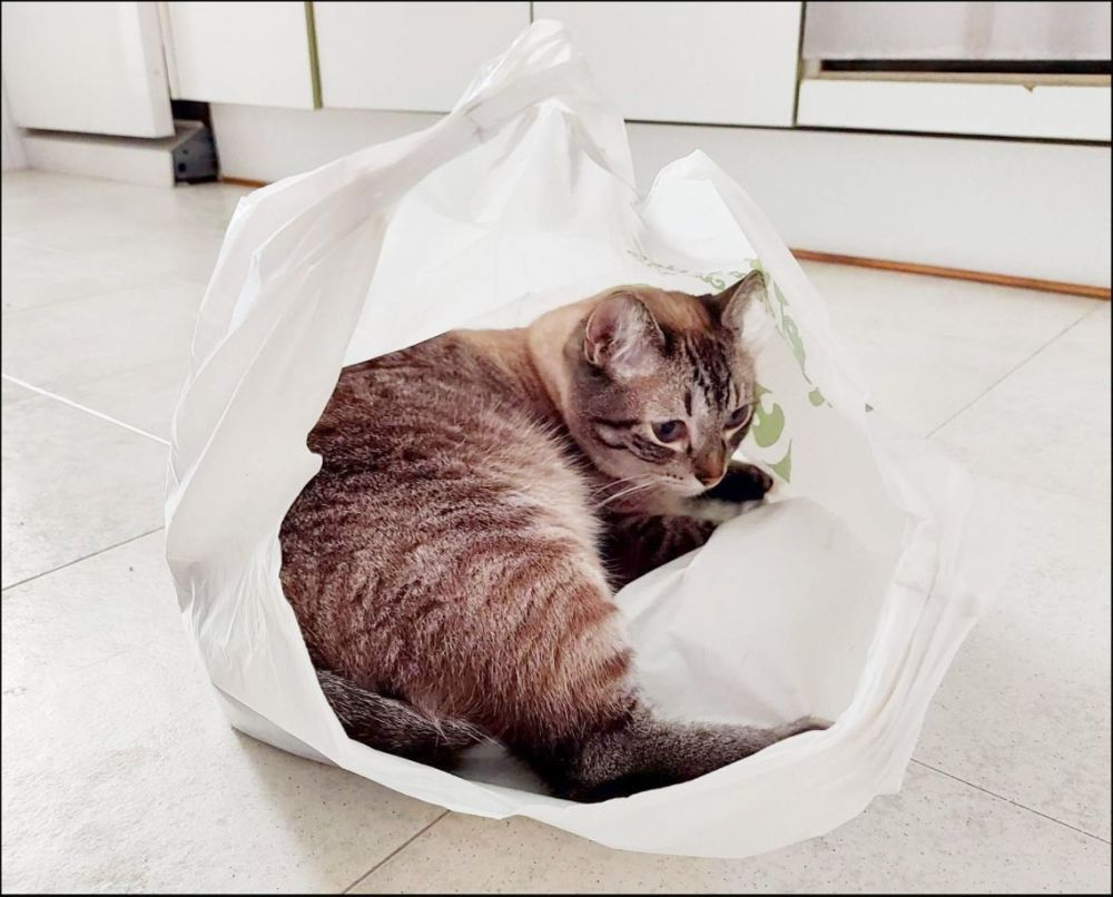 Kirin in A Plastic Bag