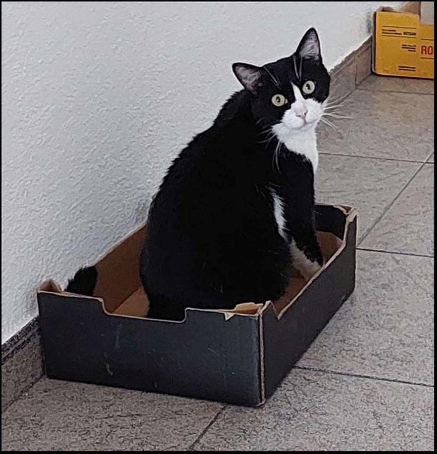 Felix in a New Cardboard Box
