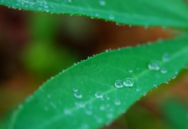 After the rain #2