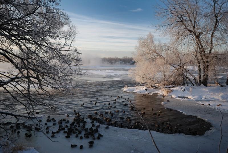 Ducks at Ile des moulins
