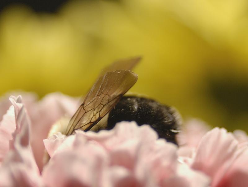 Bee... ...ing  in a flower