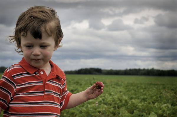 Strawberry field II
