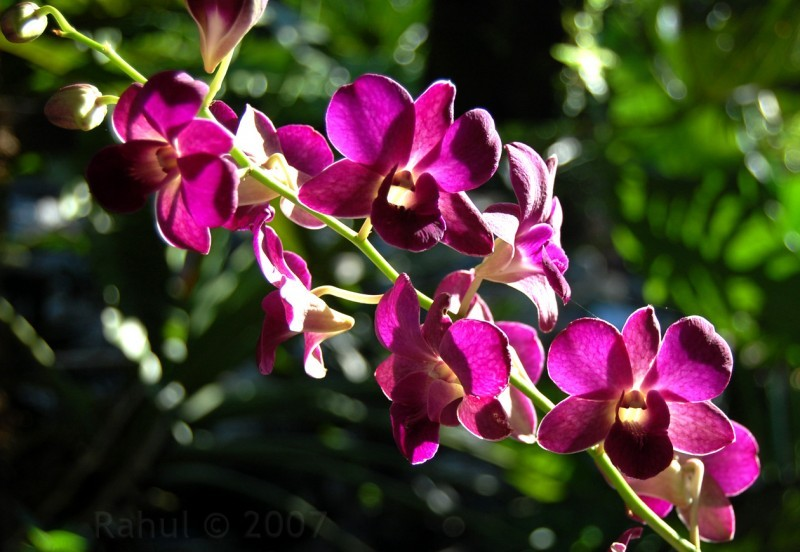 Colorful Orchid