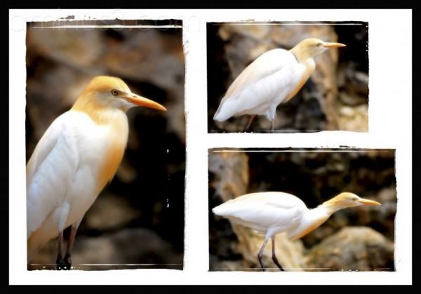 Triptych Birds