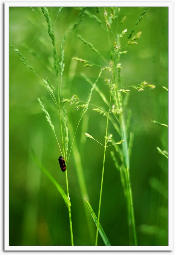 little insect in grass