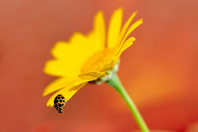 a ladybird on a flower