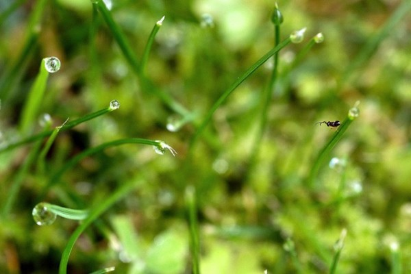 an ant on wet grass