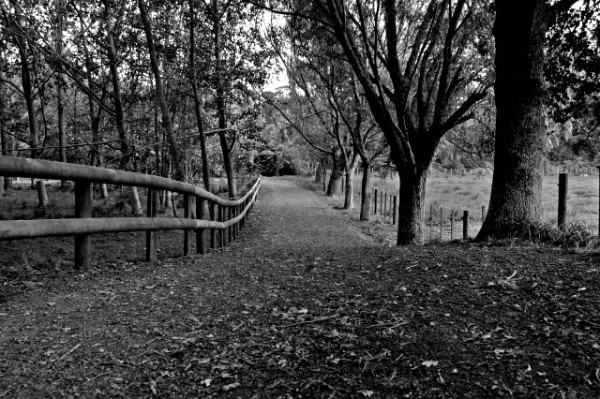Pathway in a park