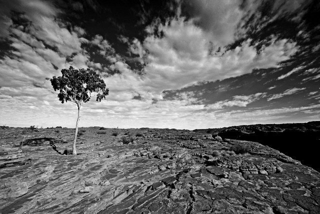 Red Centre - Kings Canyon IX