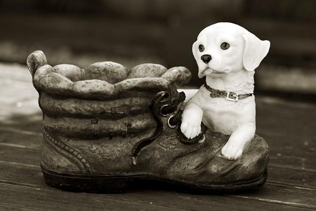 Puppy's Boot