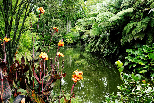 Woodlands Garden