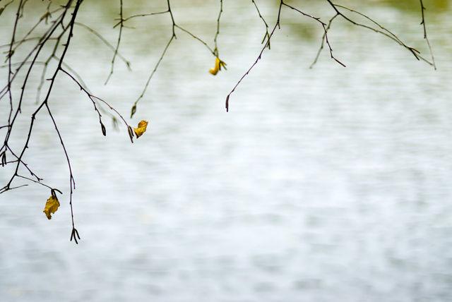 I Dream Of Autumn