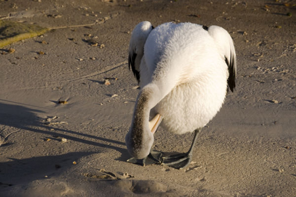 bird animal