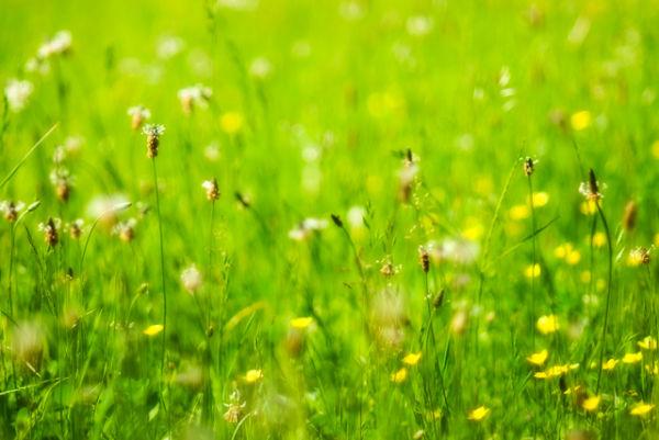 I Dream Of Wildflowers