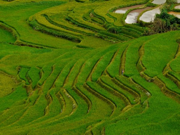Terraced rice fields near Yuanyang