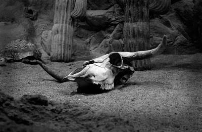 skansen, akvariet