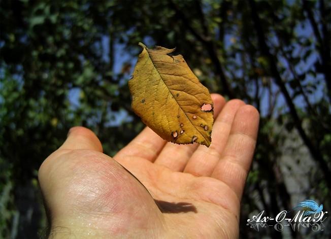 Feeling a Leaf