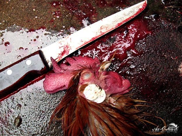 Blood and Daggar