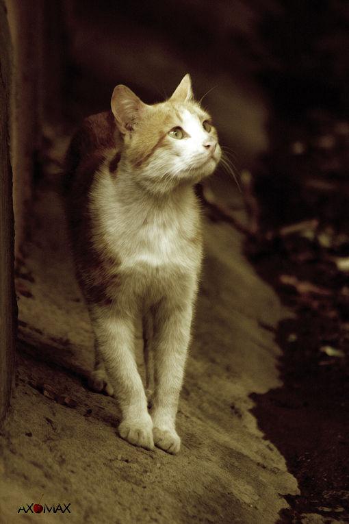 Cat Head-to-air