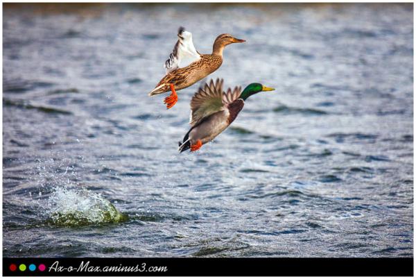 Life is a strange feeling It is a migratory bird.