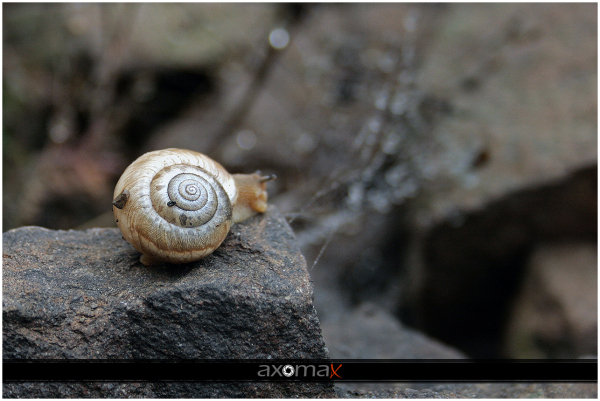 The beauty of the snail