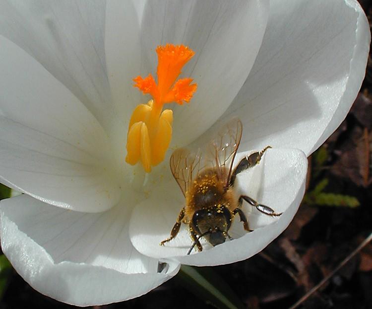 one happy bee