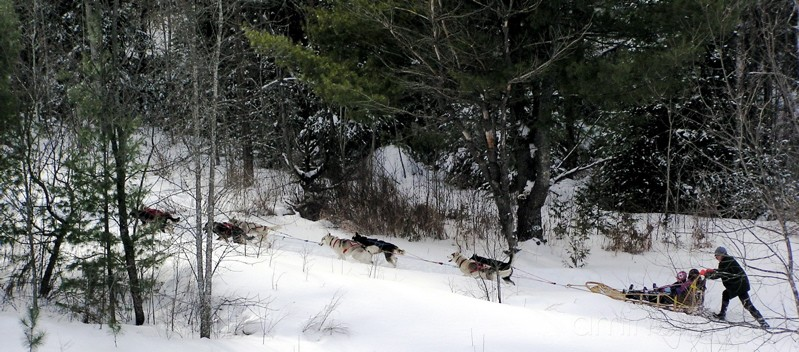 Forest musher