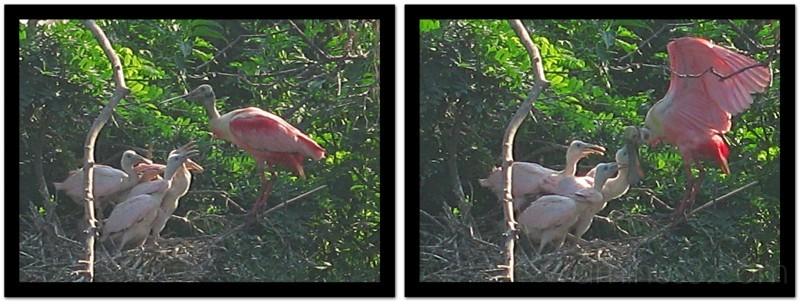 motherhood in pink