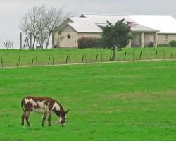 burro's dream of paradise