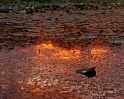 molten lily pad