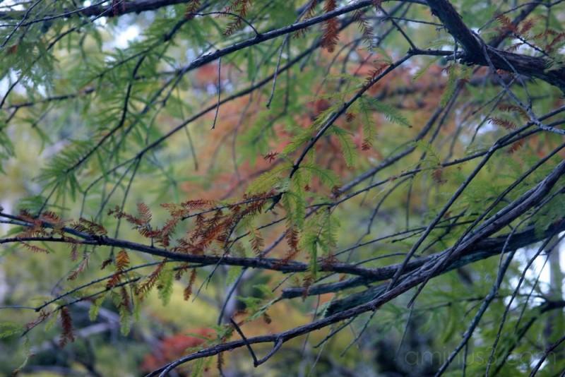 Fall, southern style