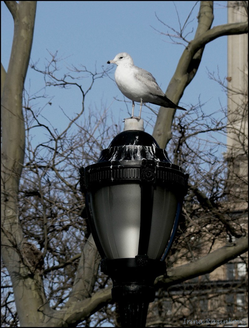 Birdy in NY