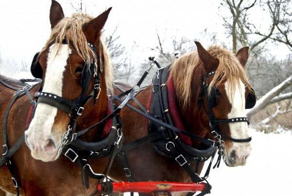Winter transportation 200 years ago