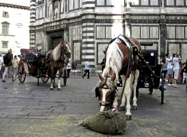 Florence 2007