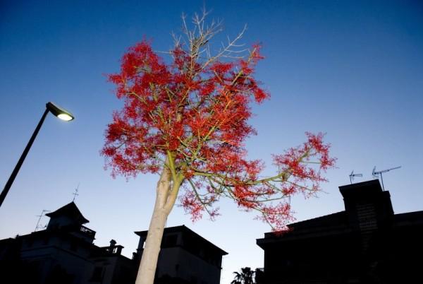 RED TREE PALMA MALLORCA