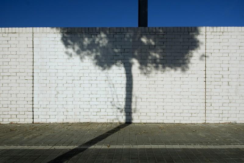 TREE SHADOW BARCELONA