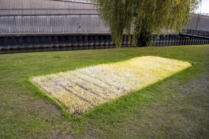 ETIOLATED GRASS