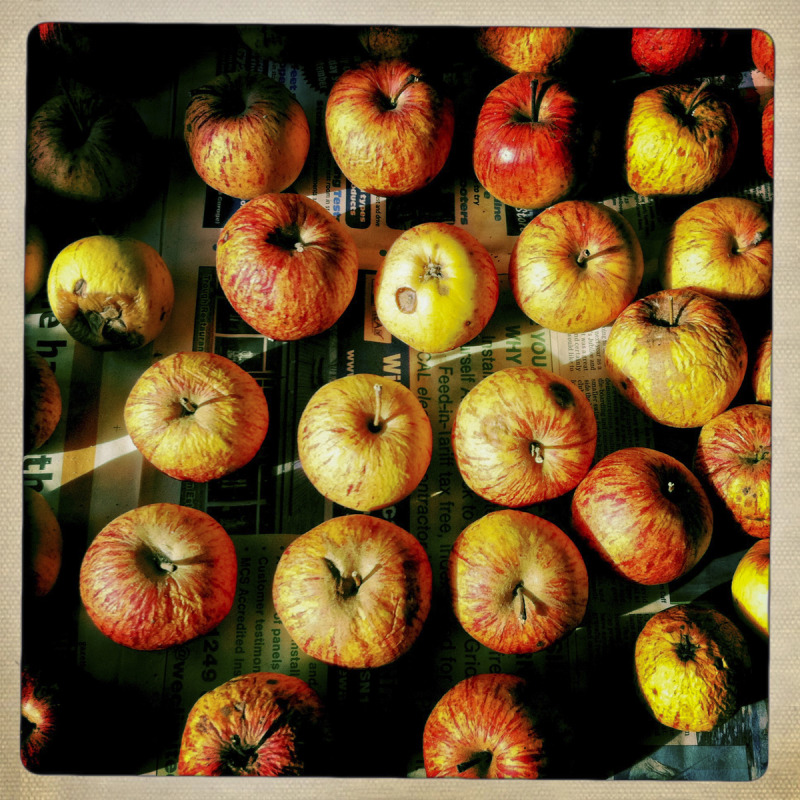 SOME OF DAVID'S APPLES