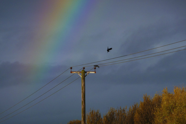 CROWS AND A RAINBOW