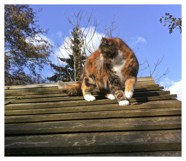 CAT ON A COLD SHED ROOF
