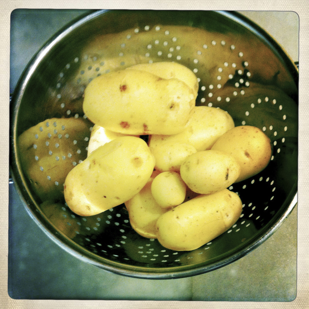 THE FIRST SPUDS OF THE YEAR