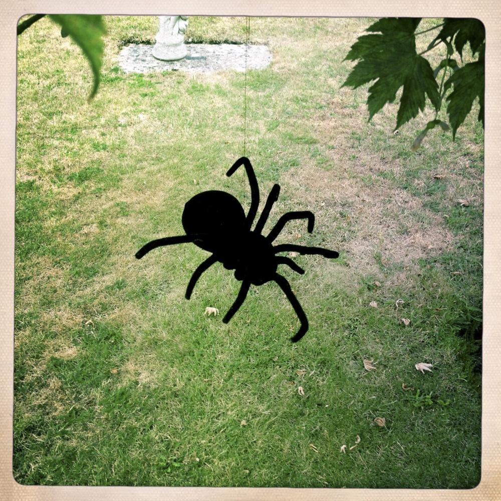 KEN'S SPIDER