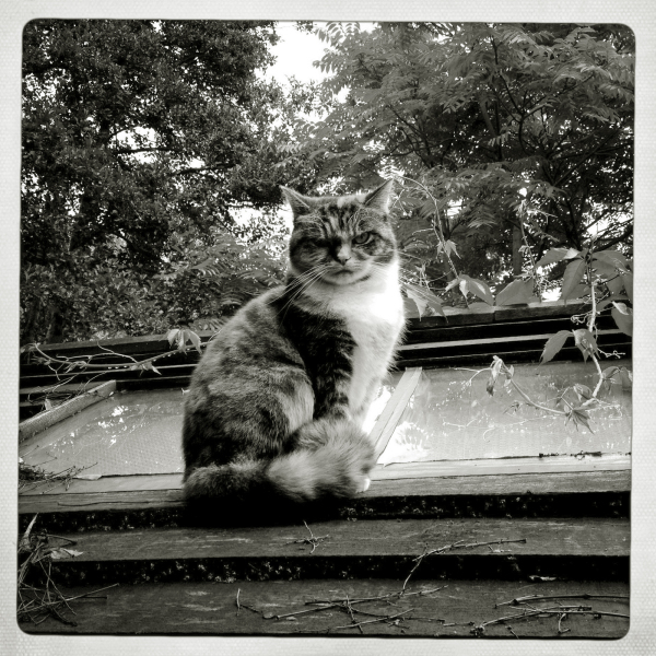 THE CAT ON MY SHED ROOF