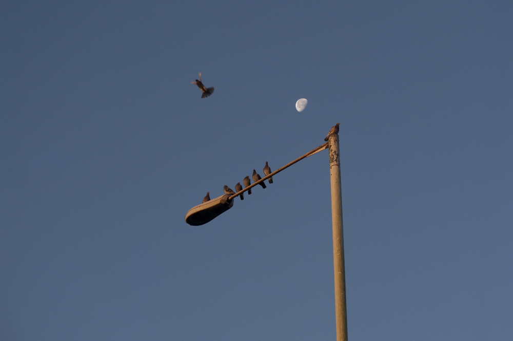 PIGEONS AND MOON