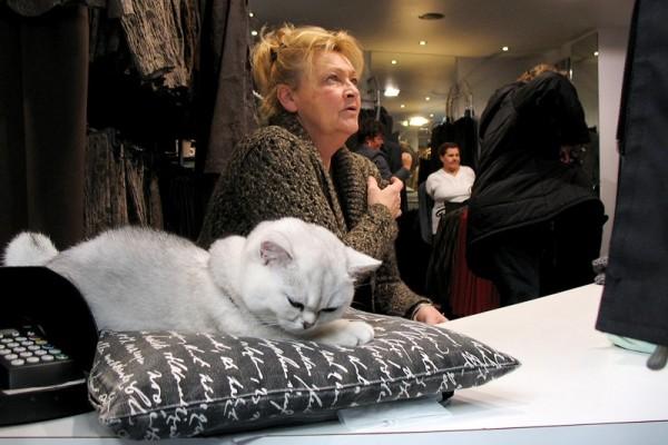 Store Cat