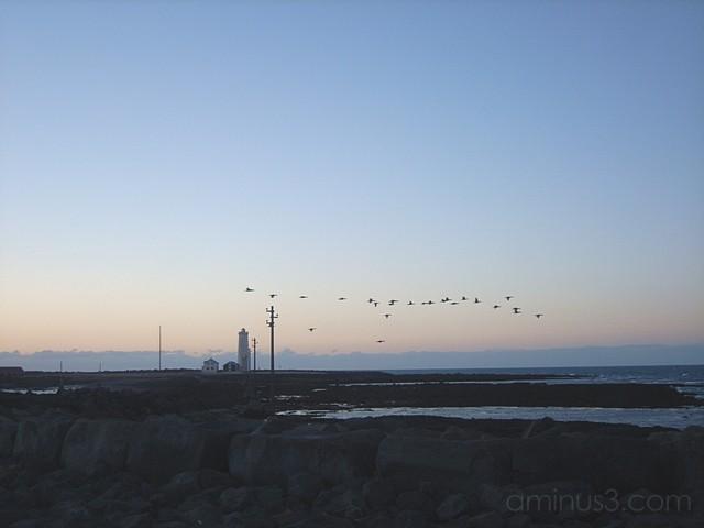 birds over lighthouse