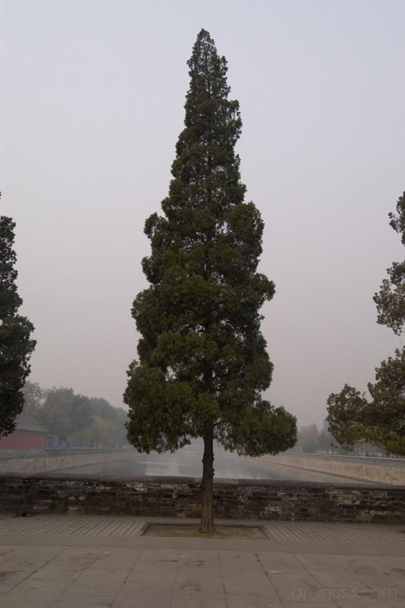 tree near canal